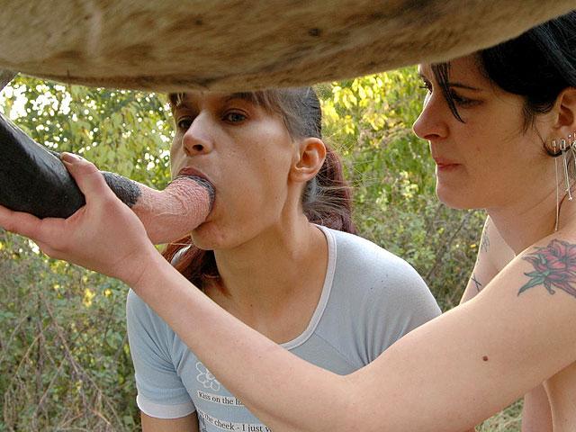 Deux femmes salopes branlent un cheval | Perversion Zoophile